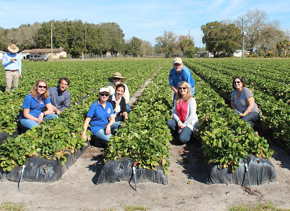 Extension group in strawberry field
