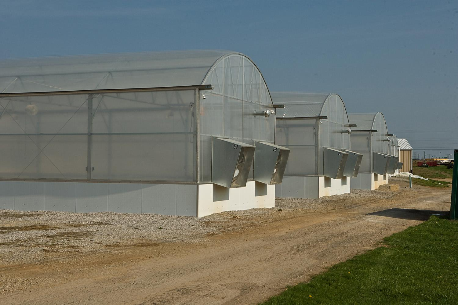 Greenhouse at South Farm