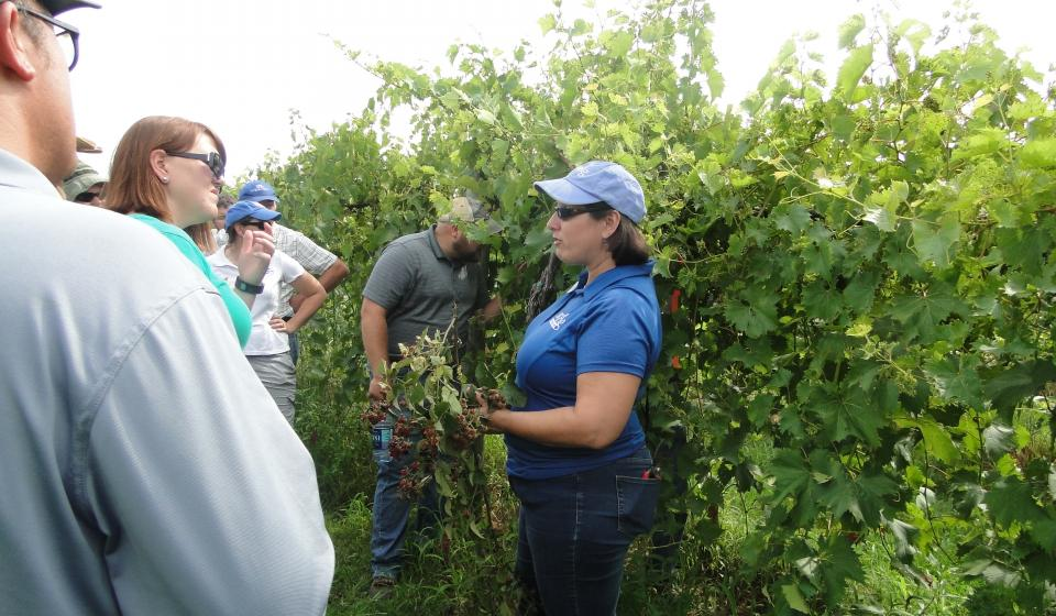 The Mission of Extension Plant Pathology