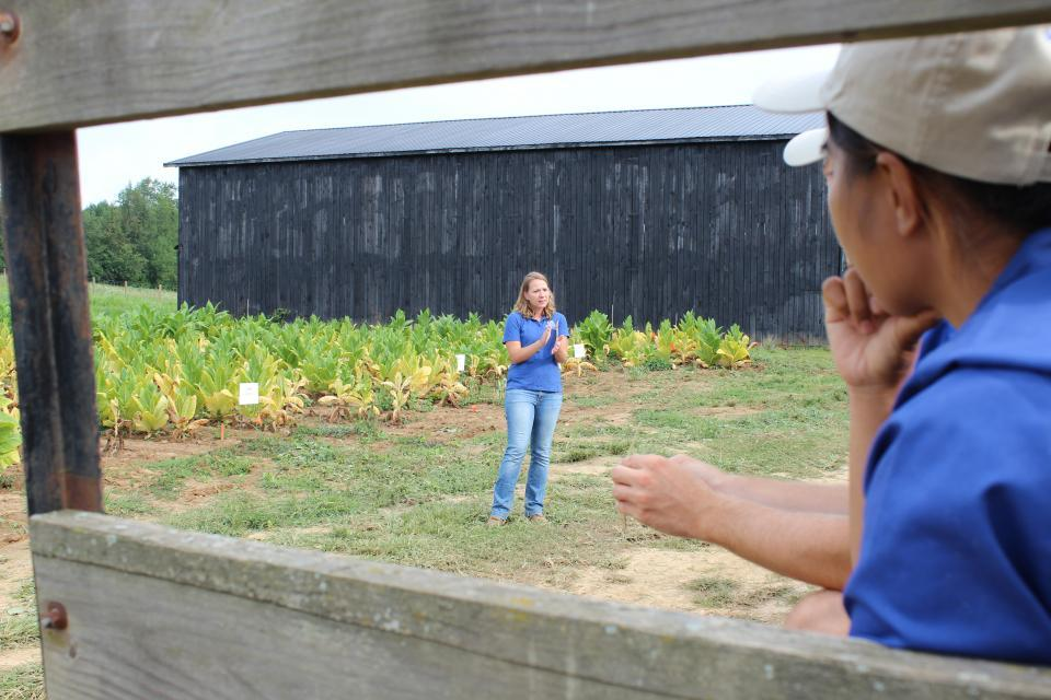 Tobacco field day